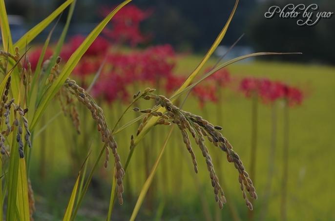 秋の情景.jpg