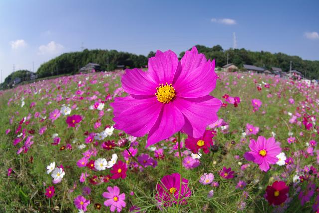 花びらいっぱいに太陽を受けて.jpg